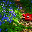 Bluebell phone - Stock Photo