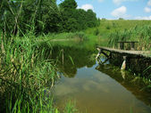 Pond and old bridge — Stock Photo