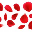 Royalty-Free Stock Vector Image: Red rose petals