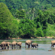 Elephants family - Stock Photo