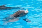 Bottlenose dolphin — Stock Photo