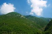 Groene bergen — Stockfoto