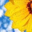 Wet yellow flower background — Stock Photo