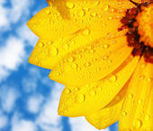 Wet yellow flower background — Stock Photo