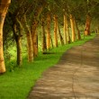Forest pathway — Stock Photo #5482574
