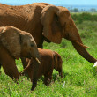 Family of elephants in the wild — Stock Photo