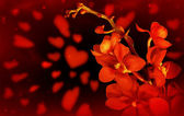 Red orchid love background — Stock Photo