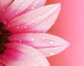 Pétalos de flores abstractas — Foto de Stock