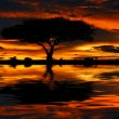 Tree silhouette and dramatic sunset - Stock Photo