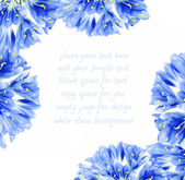 Blue flower border — Stock Photo