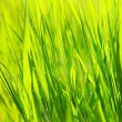 Fresh green grass background — Stock Photo #5887141