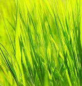 čerstvé zelené trávě pozadí — Stock fotografie