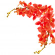 Red orchid border — Stock Photo