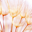 Abstract dandelion flower background — Stock Photo #6053561