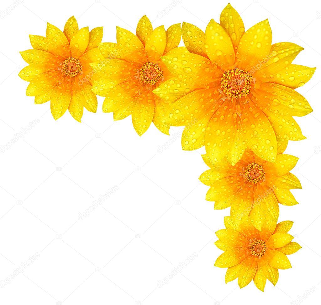 Yellow flower border — Stock Photo © AnnaOmelchenko #6053593