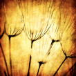 Grunge abstract dandelion flower background — Stock Photo