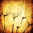 Grunge abstract dandelion flower background — Stock Photo #6166996