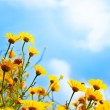 Flowers border over sky — Stock Photo