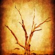 Dry grunge african tree - Stock Photo