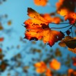 Autumn background — Stock Photo #6445876