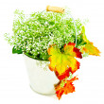 Bucket of autumn leaves & wildflowers — Stock Photo