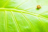 Fond naturel feuille verte — Photo