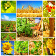Stock fotografie: Harvest concept collage