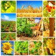 Harvest concept collage — Stock Photo