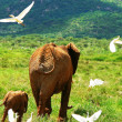 Foto Stock: Family of elephants in the wild