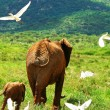 Stock Photo: Family of elephants in the wild