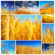 Wheat field collage - Stock Photo