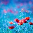 Poppy flower field at night — Stockfoto