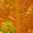 Recycle symbol on the leaf background - Stock Photo