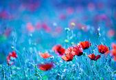 Poppy flower field at night — Stock Photo