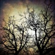 Grungy trees background — Photo