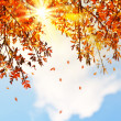 Stock Photo: Beautiful autumn tree leaves background border