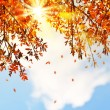 Beautiful autumn tree leaves background border — Stock Photo