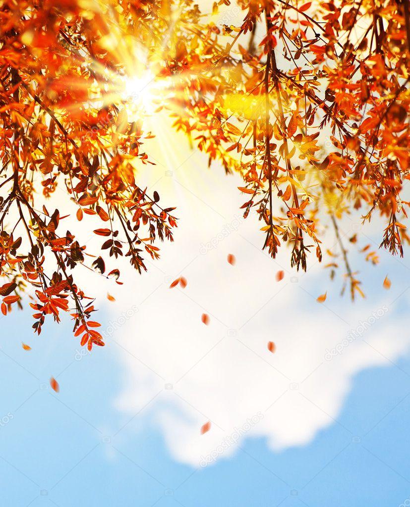 Beautiful autumn tree leaves background border stock image