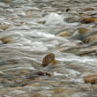 Stock Photo: River flow over rocks
