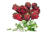 Dried red roses — Stock Photo