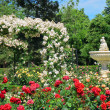 Rose garden and fountain — Stock Photo #5793119