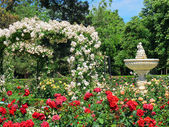 Rose garden and fountain — Stock Photo