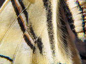 Butterfly wing detail and texture — Stock Photo