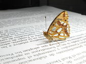 A small orange and silver butterfly on a newspaper — Stock Photo