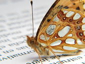 Orange butterfly on a newspaper — Stock Photo