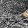 Empty nest with an insect walking on the white background — Stock Photo