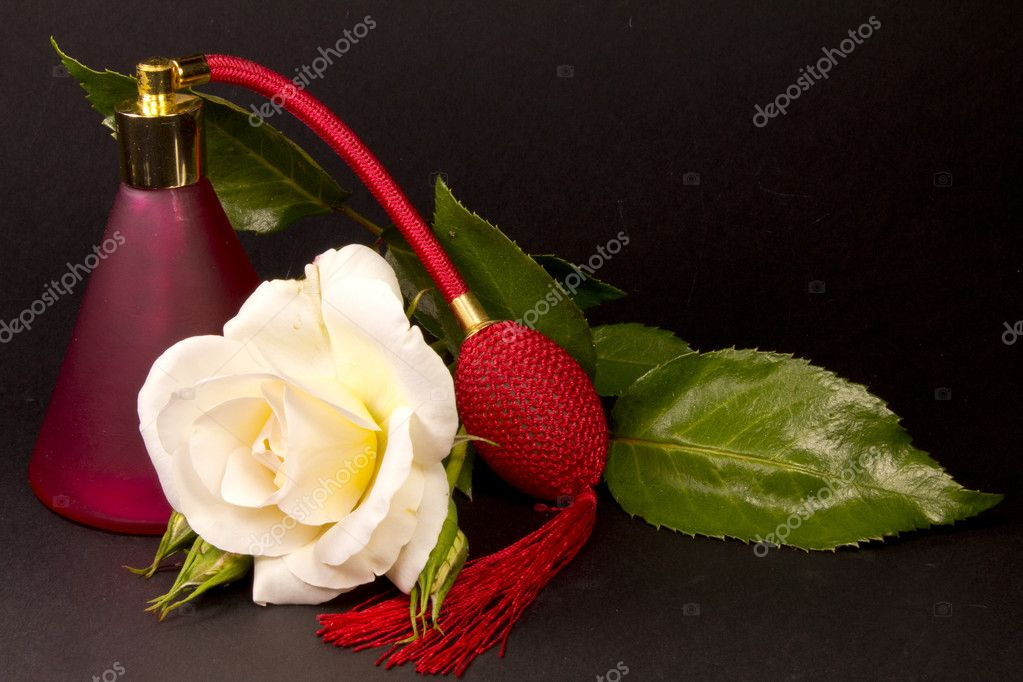 A composition of rose spray and leaf — Stock Photo #5950417
