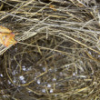 Empty nest with an insect walking — Stock Photo