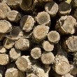 Pile of cut logs for firewood — Stock Photo
