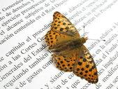 小さなオレンジ色の蝶と伸ばしたと本の銀 — ストック写真